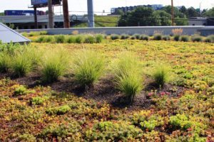 SkyGarden sedum and perennials by Skydeck USA in Grand Rapids, MI