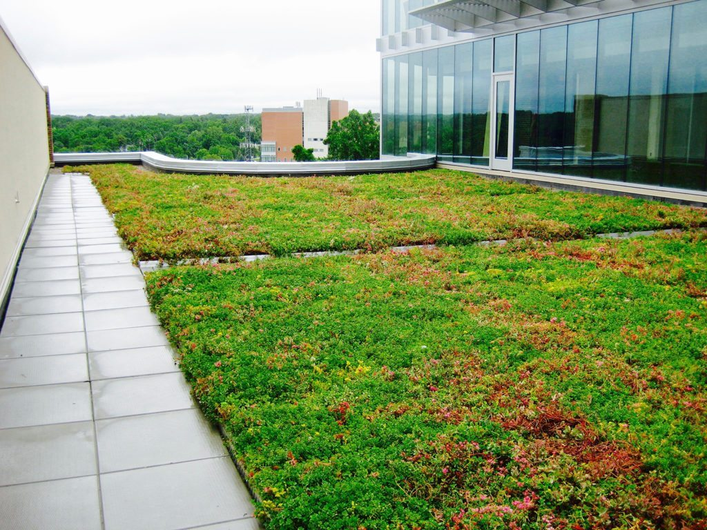 Skydeck Usa Project Gallery Pedestals Concrete Pavers